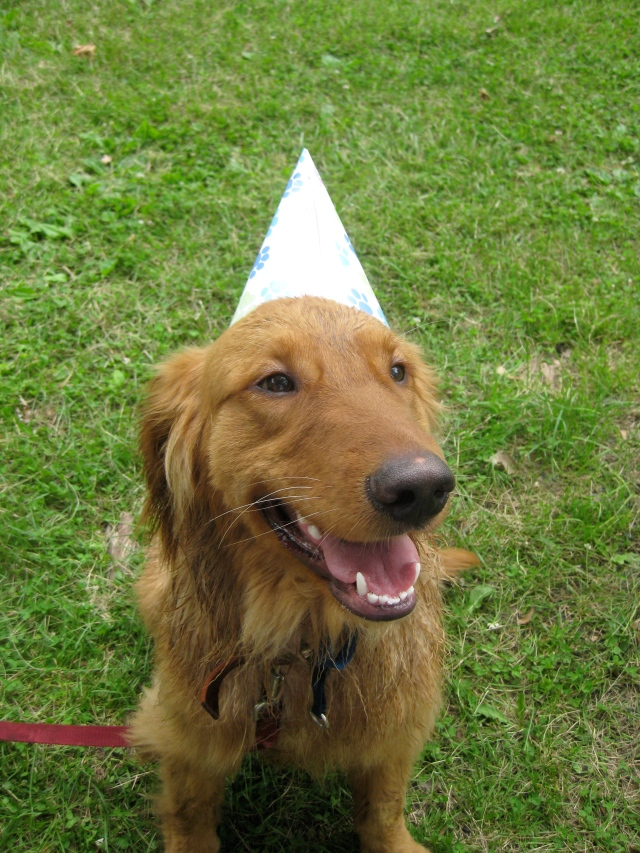 chase in party hat